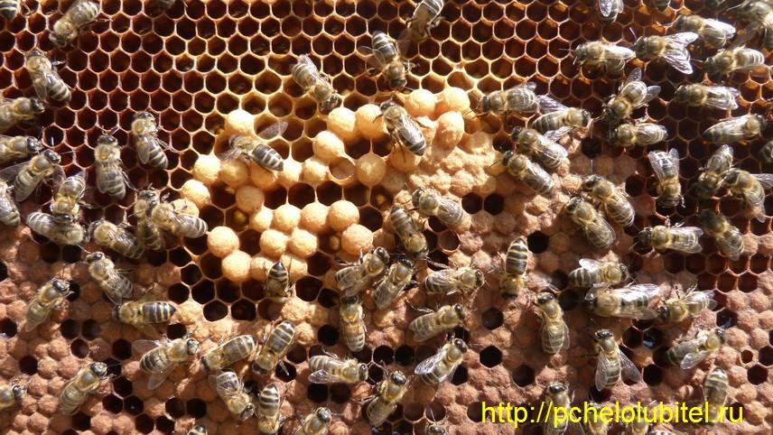 Подкормки для пчел